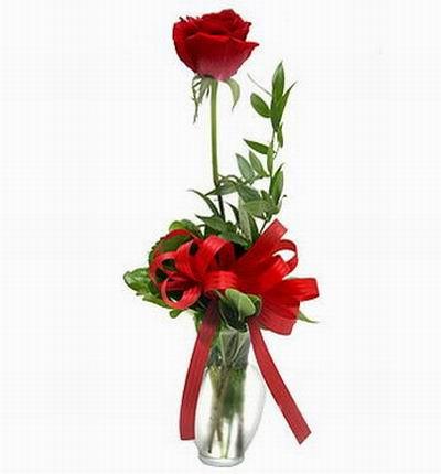 Single Vased Rose