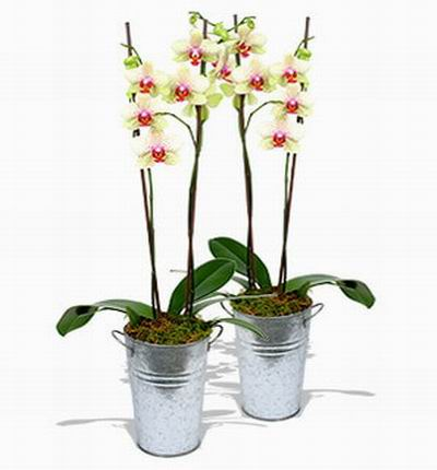 Orchid Selection